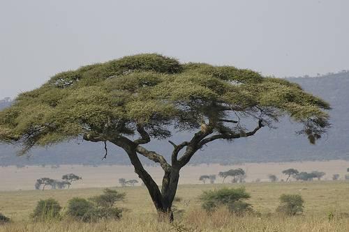 Parque Nacional del Serengueti en Tanzania