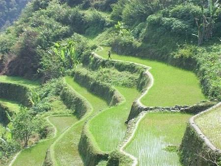 Las Imponentes Terrazas De Cultivo De Arroz En Filipinas