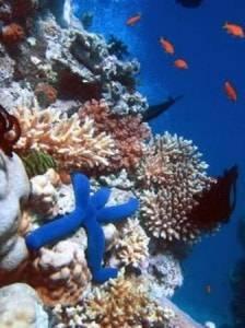 acuario-de-arrecife-de-coral-cancun