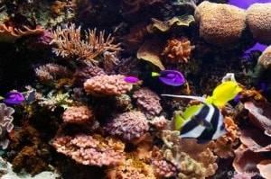 monterey-bay-aquarium-2