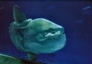 monterey-bay-aquarium-3