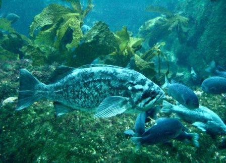monterey-bay-aquarium-5