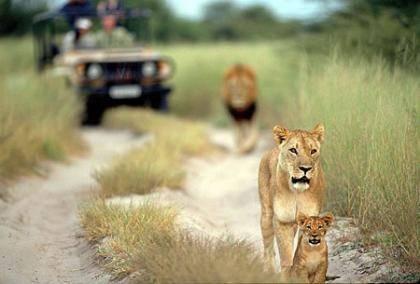 parque_nacional_kruger_sudafrica
