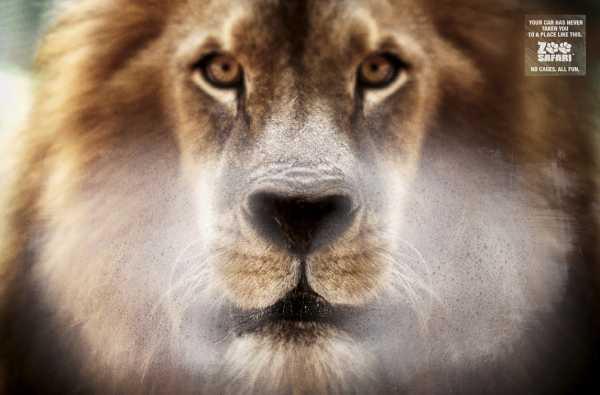 zoo-safari-sao-paulo