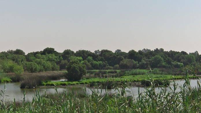 La belleza del Parque Natural de Doñana en Huelva, Sevilla y Cádiz 5