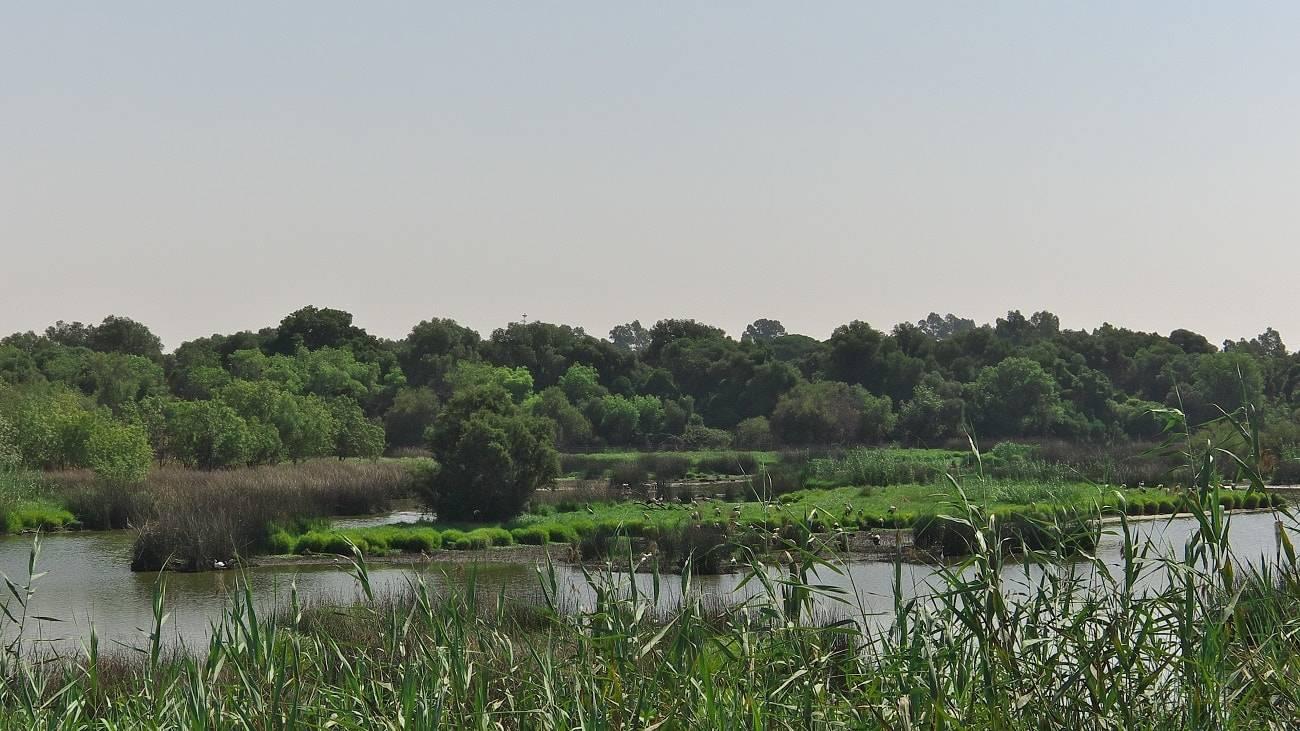 La belleza del Parque Natural de Doñana en Huelva, Sevilla y Cádiz 2