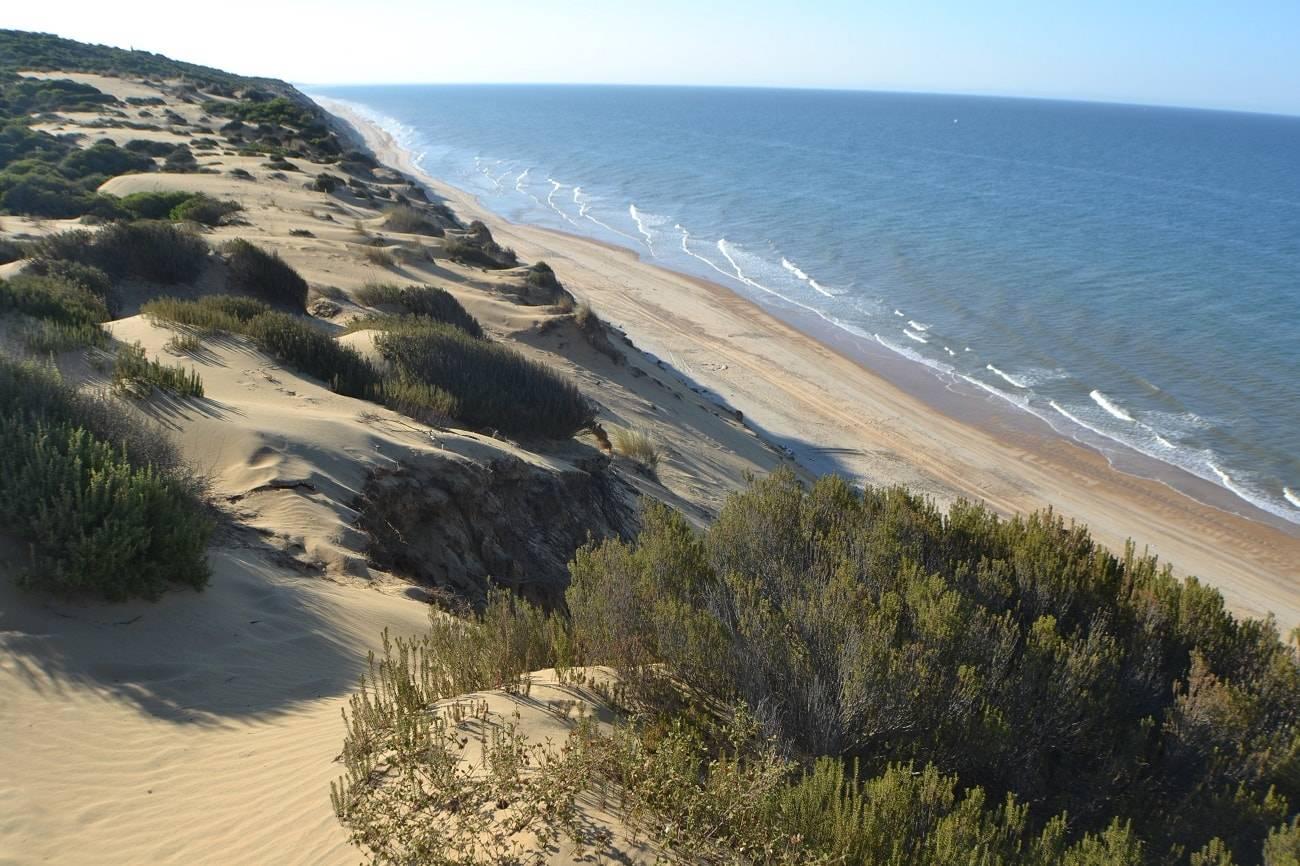 La belleza del Parque Natural de Doñana en Huelva, Sevilla y Cádiz 1