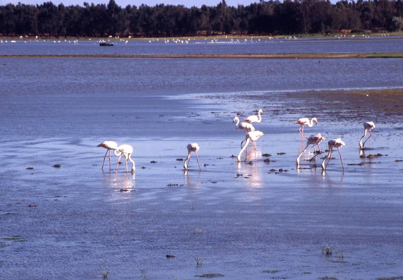 La belleza del Parque Natural de Doñana en Huelva, Sevilla y Cádiz 3