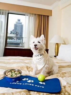 hoteles_que_admiten_mascotas