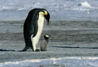 pinguinnos