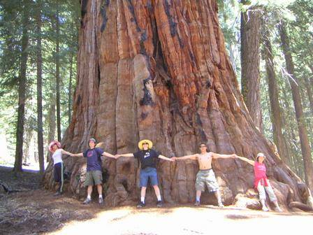 parque-sequoia-usa
