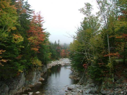bosque nacional white mountain