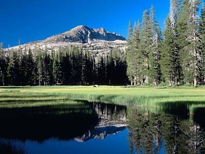 Bosques y parques en EEUU para acampar 2