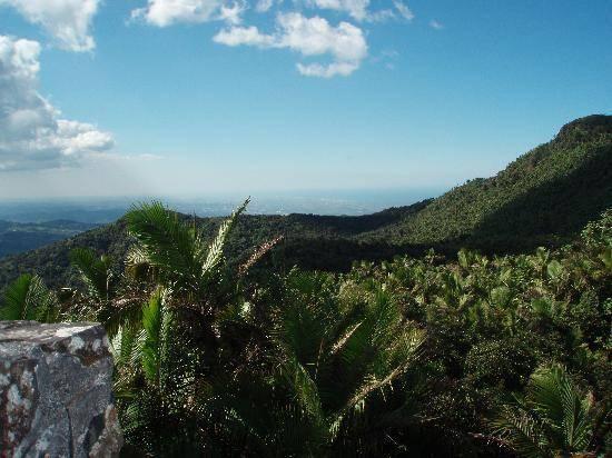Parque Nacional El Yunque en Puerto Rico 1