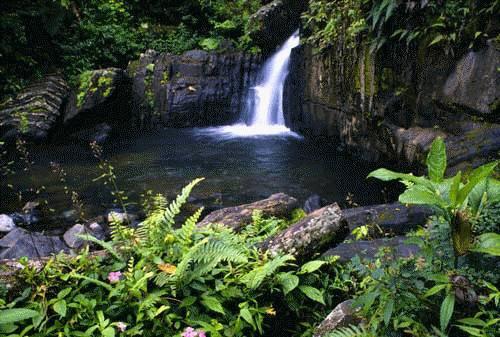Parque Nacional El Yunque en Puerto Rico 2