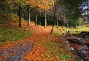 Bergen: Los asombrosos colores de Noruega 3