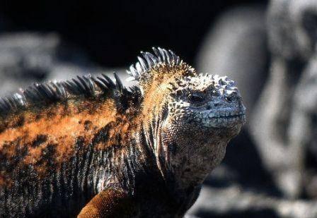 Galápagos: el origen de las especies 2