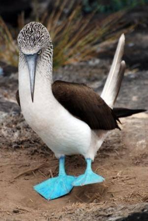 Galápagos: el origen de las especies 3