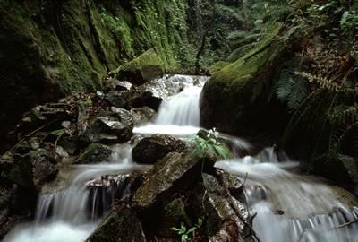 Valle de Arbúcies, un rincón donde perderse 1