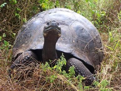 Islas Galápagos, Ecuador 3