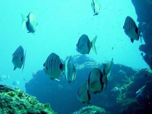 Islas para bucear en el Atlántico 2