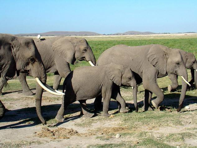 parque nacional de kenia