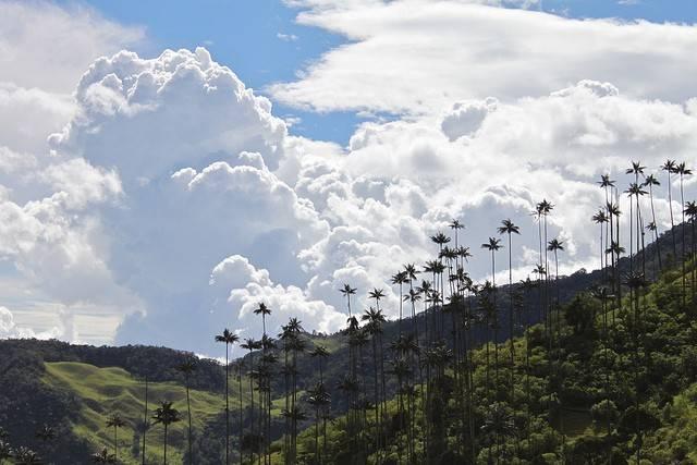 Valle de Cocora en Colombia 2