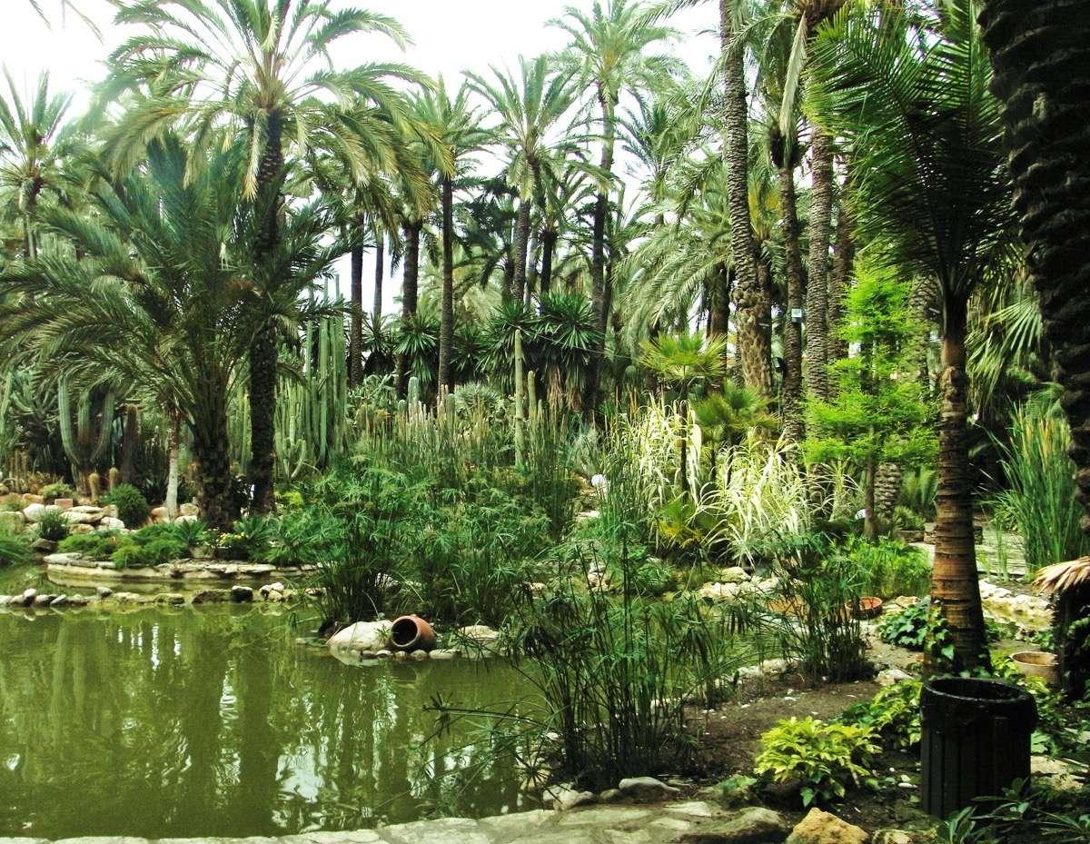 Alicante el palmeral