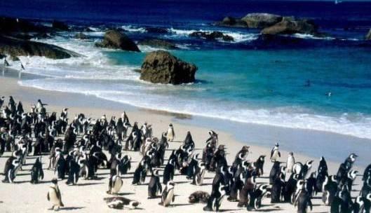reserva pinguinos chubut