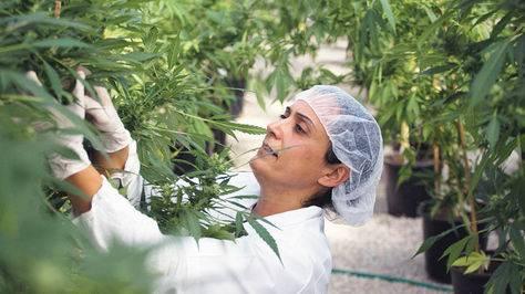 Uruguay marihuana 1