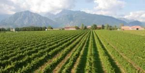 Friuli Venezia Giulia, una región con encanto