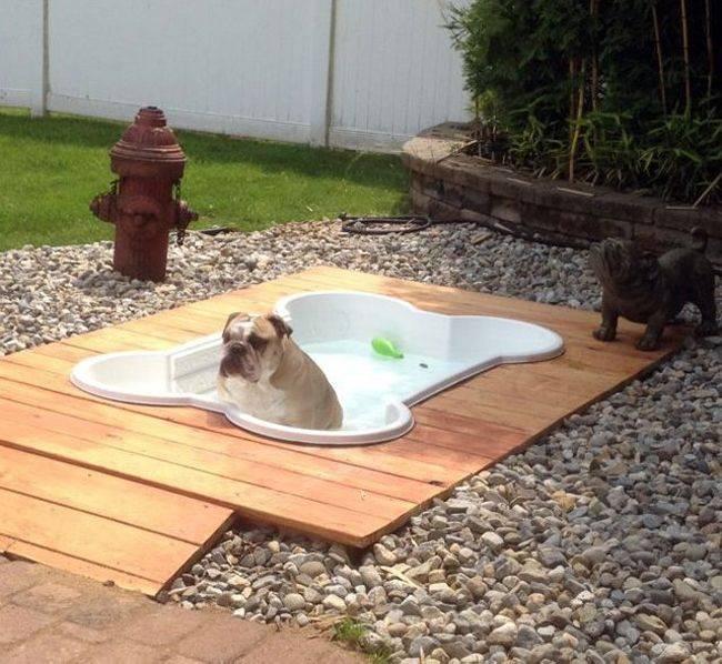 cosas caras - una piscina para el perro