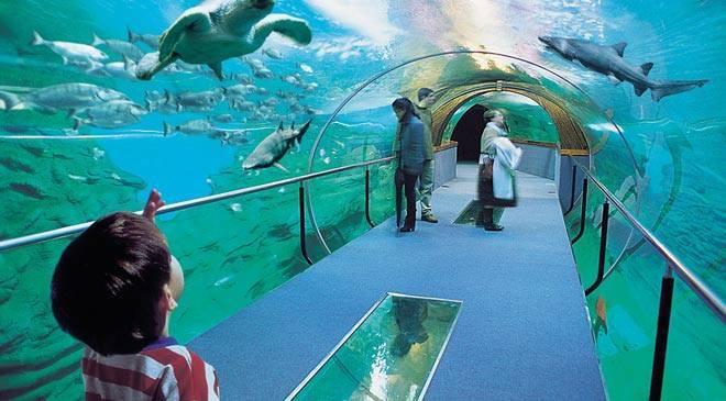 Será por acuarios para saber que hay bajo el mar