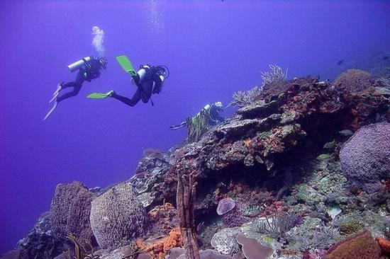 Tobago ecotourism 2