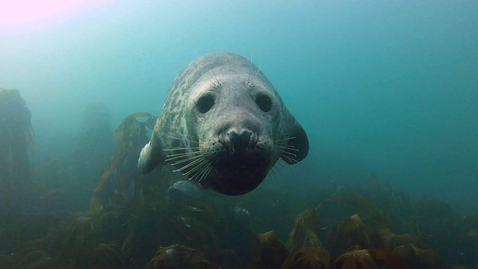 Increíble experiencia jugando con focas en las Islas Farne