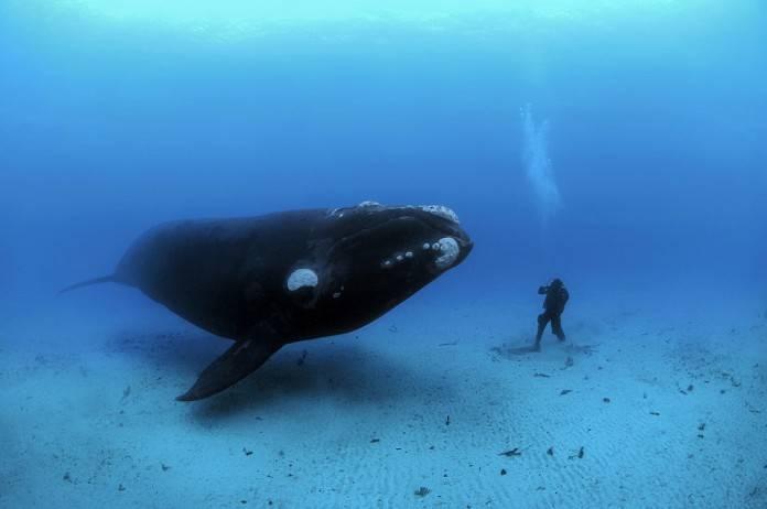 ¿Qué harías frente a una ballena de 13 metros? 2