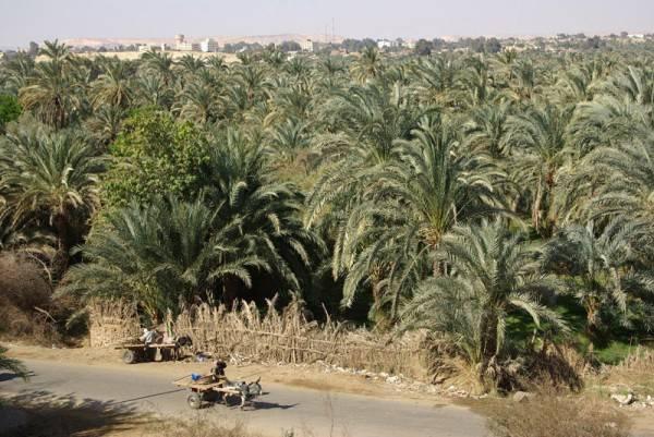 oasis-bahariya-egipto