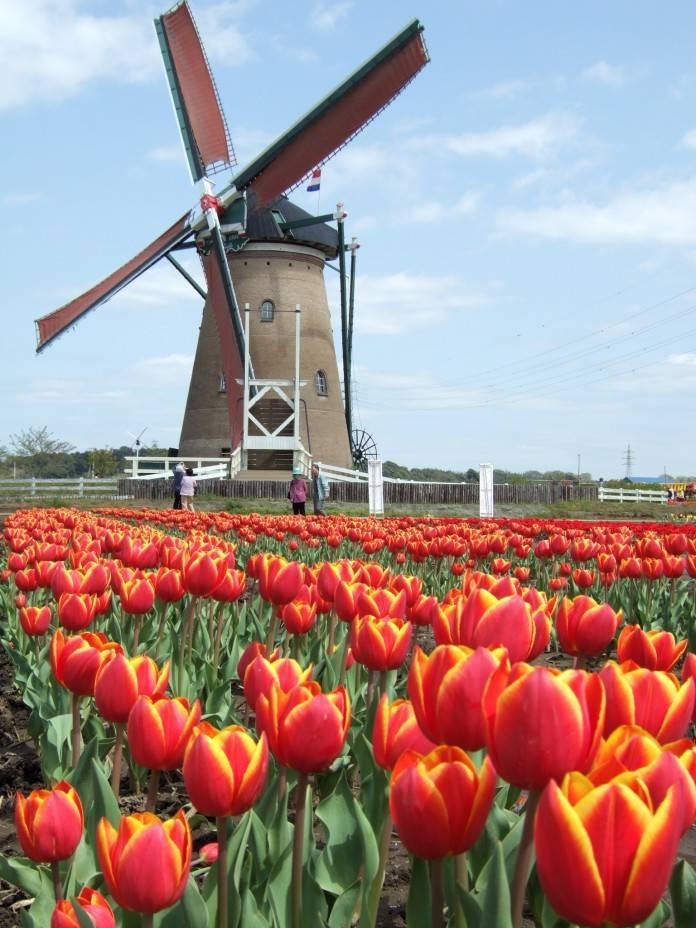 Sin noticias desde Holanda 2