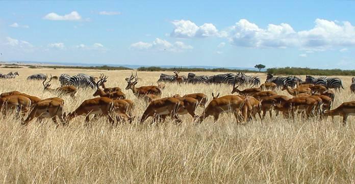 Lugares para ver antes de morir, Masai Mara 2