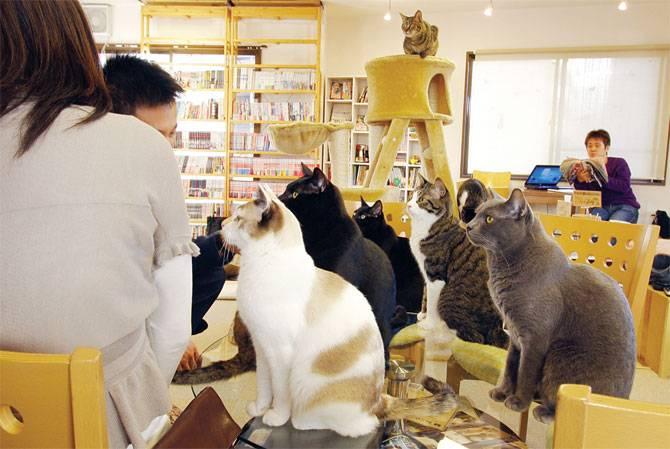 Los mejores Cat Cafés del mundo 2