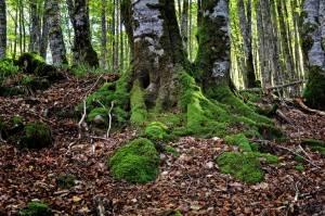 Sitios para visitar en Otoño - Selva de Irati
