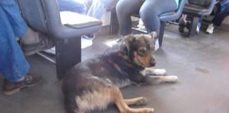 viajar con perros: autocar