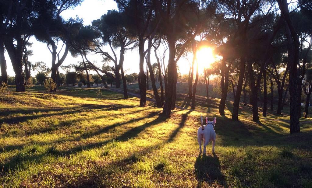 parques para correr en madrid: dehesa de la villa