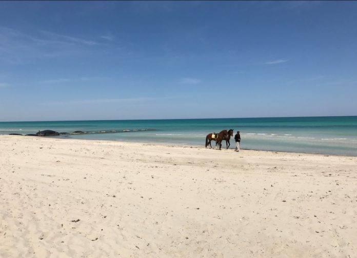 Túnez, un país con una gran diversidad de paisajes 3