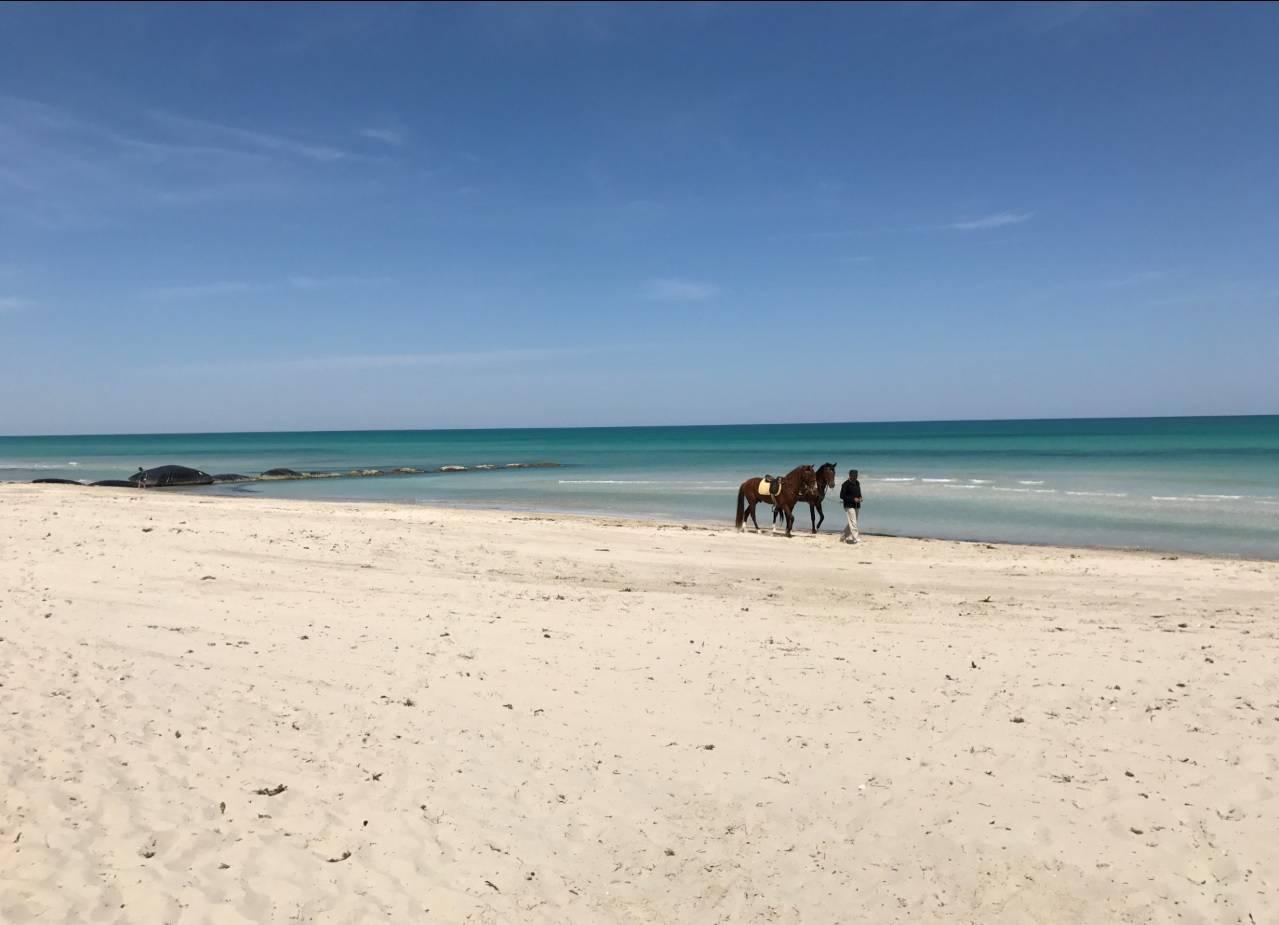 Túnez, un país con una gran diversidad de paisajes 1