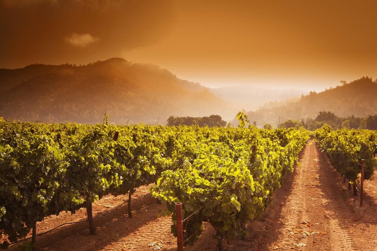 Mejores escapadas para los amantes del vino 5