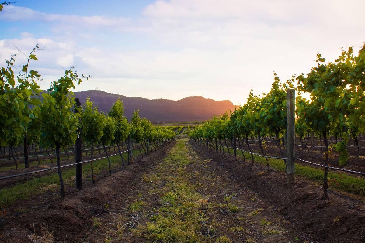 Mejores escapadas para los amantes del vino 6
