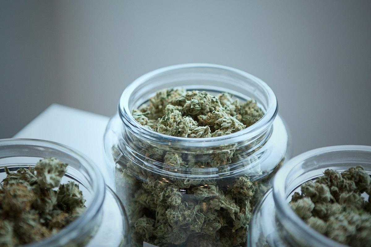 Cannabis Híbridas: Todo lo que necesitas saber cuándo viajes a Barcelona 2