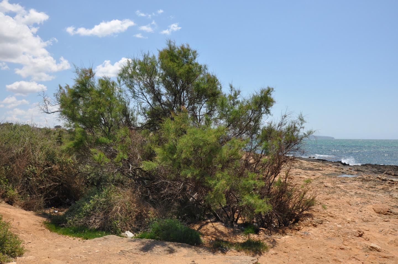 """La ruta litoral de Palma, un espacio a descubrir reconocido como """"Sendero Azul"""" 5"""