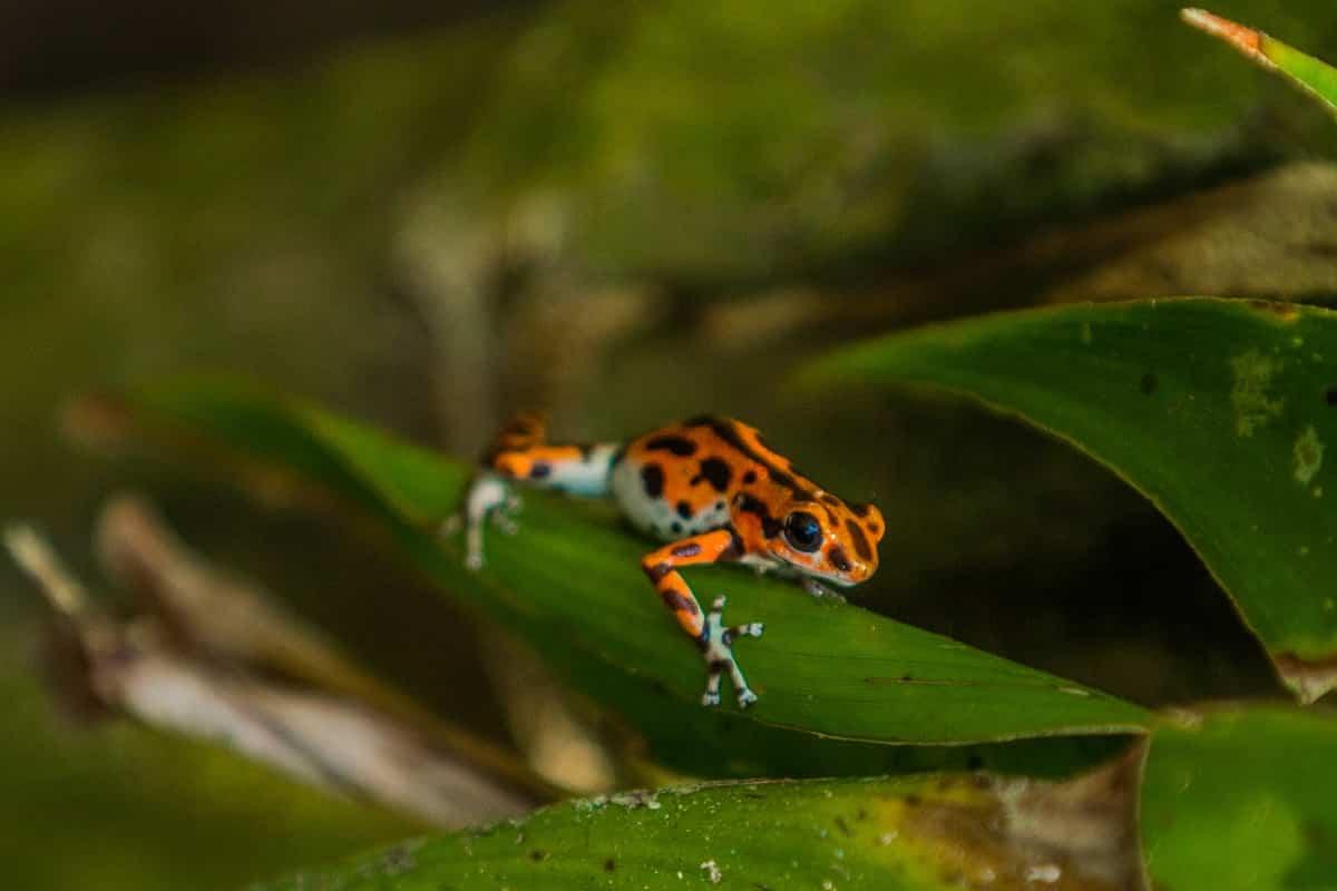 Centroamérica y República Dominicana ofrecen algunas de las especies más exuberantes del planeta 4